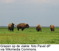 Grazen op de vlakte: foto Pavel dP via Wikimedia Commons
