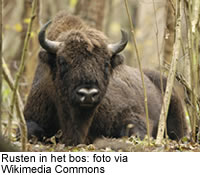 Rusten in het bos: foto via Wikimedia Commons
