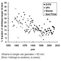 Afname in lengte van garnalen >60 mm. Bron: Hufnagl en anderen (in press)