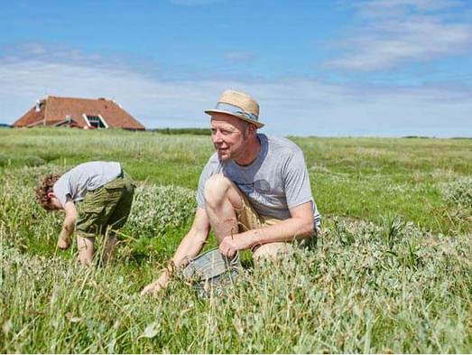 Collecting and tasting saline crops on the Island Terschelling