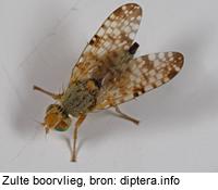 Entomofauna de diptera em área de proteção ambiental do maranhão 10